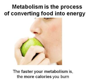 metabolism-explanation